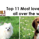 Top 11 Dog Breeds Loved across the world